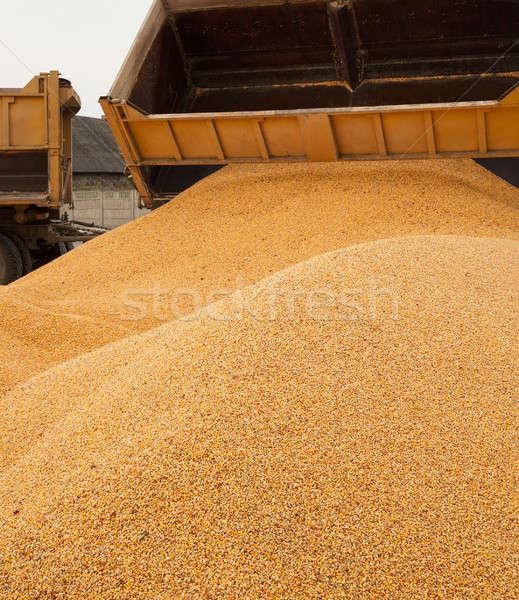 Kukurydza ostatni samochodu tle Zdjęcia stock © avq