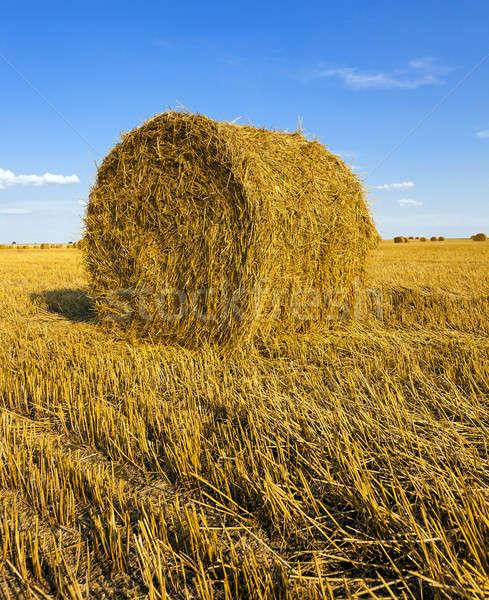 Słomy rolniczy dziedzinie lata grupy Zdjęcia stock © avq