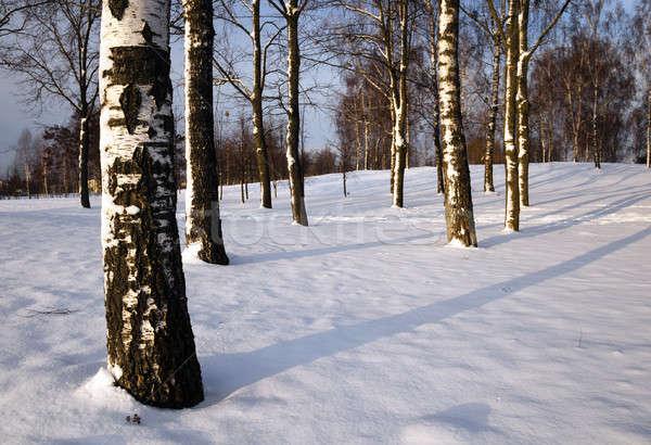 деревья зима покрытый снега растущий зимний сезон Сток-фото © avq