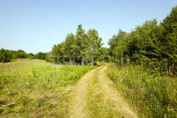 Wiejski drogowego mały nie drzewo trawy Zdjęcia stock © avq