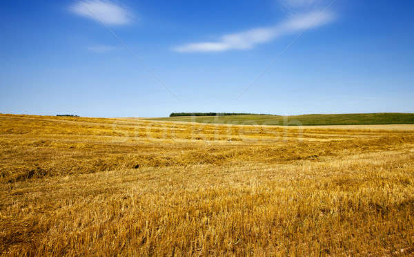 сельскохозяйственный области злаки продовольствие лет Сток-фото © avq