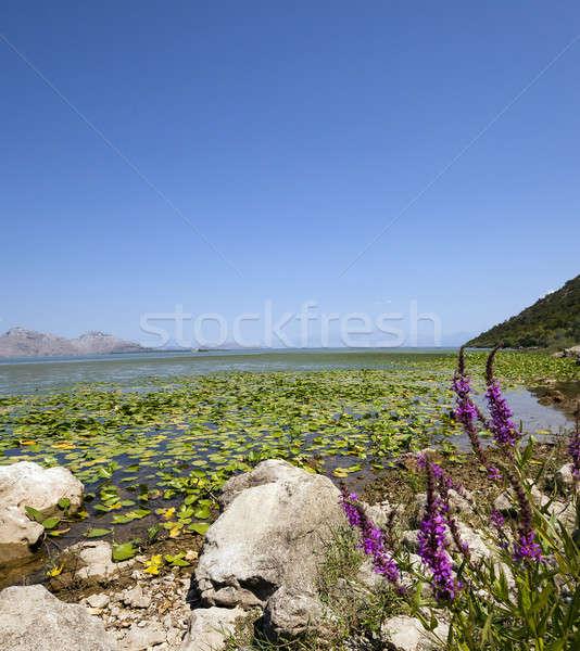 湖 モンテネグロ 夏場 年 水 緑 ストックフォト © avq
