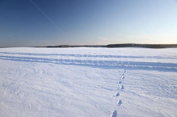 snow covered field   Stock photo © avq