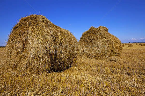 Сток-фото: сельского · хозяйства · сельскохозяйственный · области · очистки · злаки