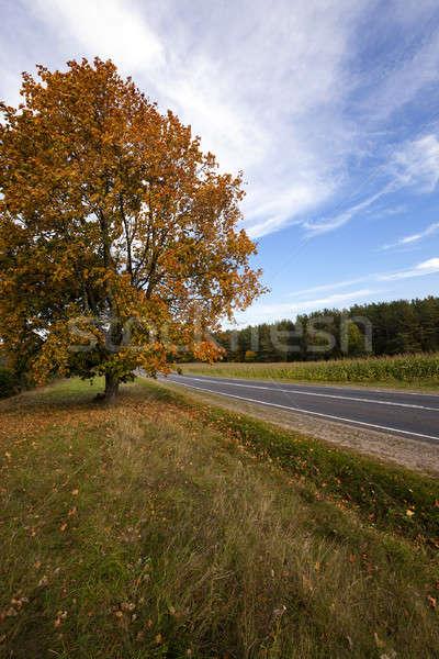 the autumn road   Stock photo © avq