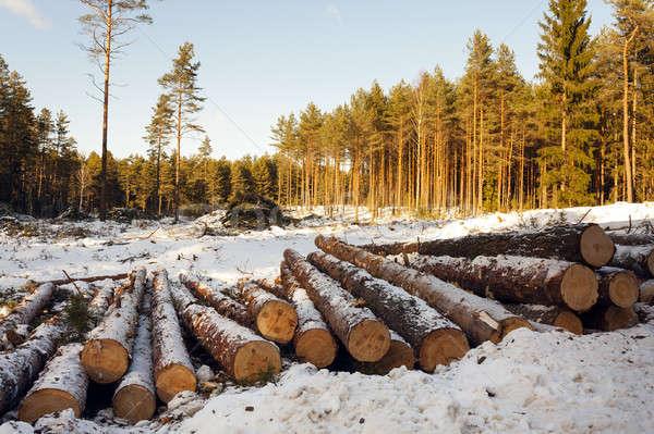 the cut trees   Stock photo © avq