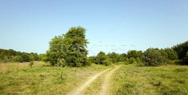 vanishing rural road   Stock photo © avq