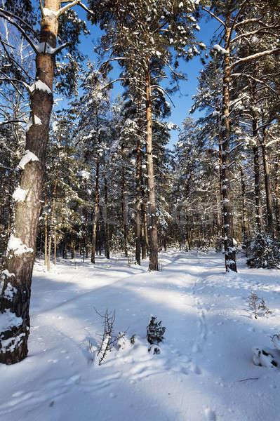 winter trees   Stock photo © avq