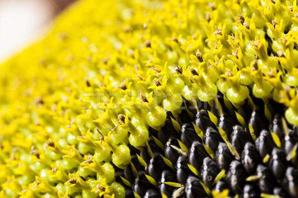 ヒマワリ 花 小 花 自然 ストックフォト © avq