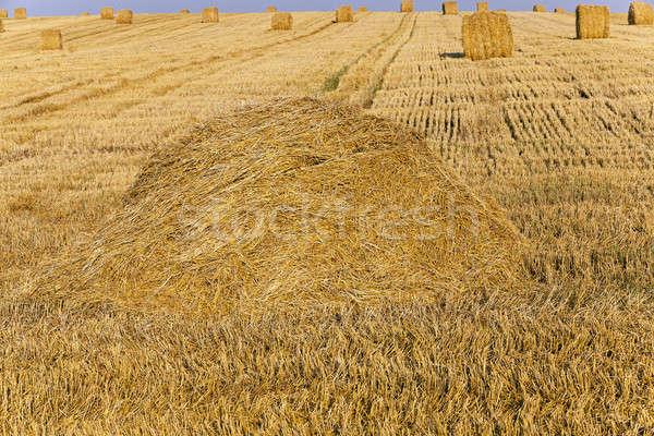 Zdjęcia stock: Dziedzinie · słomy · rolniczy · zbiorów · firmy · pszenicy