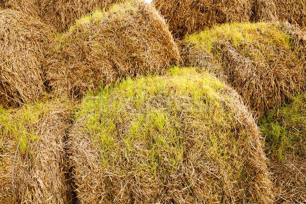 Buğday saman temizlik çim güneş Stok fotoğraf © avq