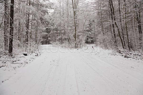 the winter road   Stock photo © avq