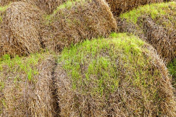 小麦 わら 洗浄 草 太陽 ストックフォト © avq