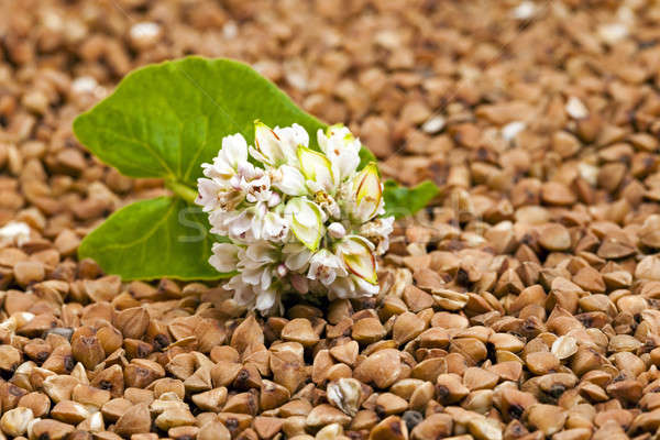 çiçek gıda kahvaltı bitki tohum Stok fotoğraf © avq