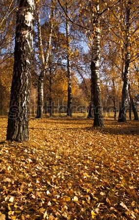 осень древесины деревья растущий Сток-фото © avq
