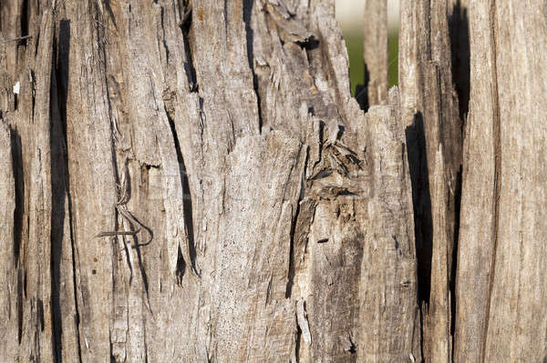 the split part of a tree   Stock photo © avq