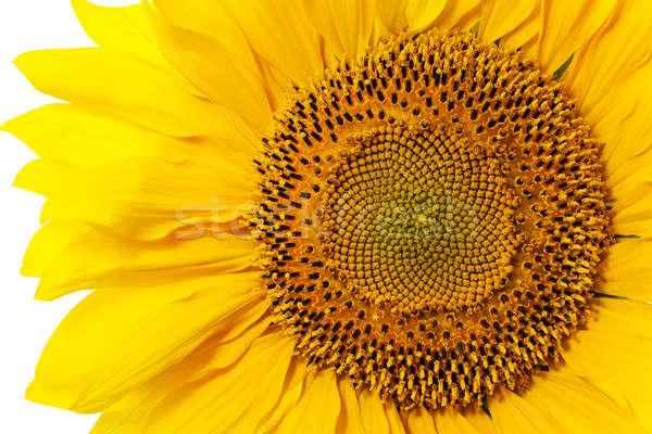 Ayçiçeği sarı çiçek güneş doğa sağlık Stok fotoğraf © avq