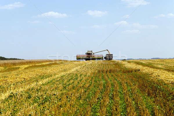 harvesting   Stock photo © avq