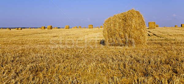 straw stack   Stock photo © avq