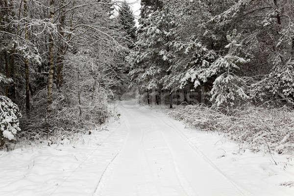 зима дороги покрытый снега зимний сезон дерево Сток-фото © avq