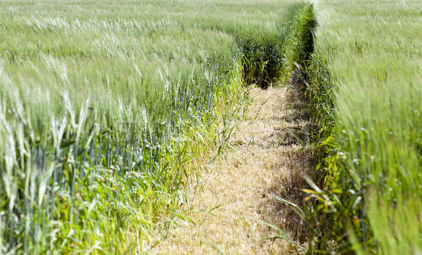 Photo agriculture, Europe Stock photo © avq