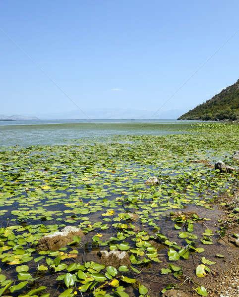 the lake  Montenegro  Stock photo © avq