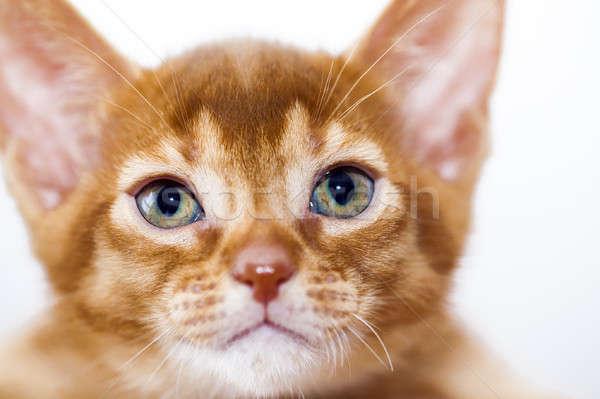 котенка мало ребенка природы кошки Сток-фото © avq