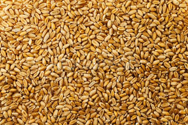 wheat grains   Stock photo © avq