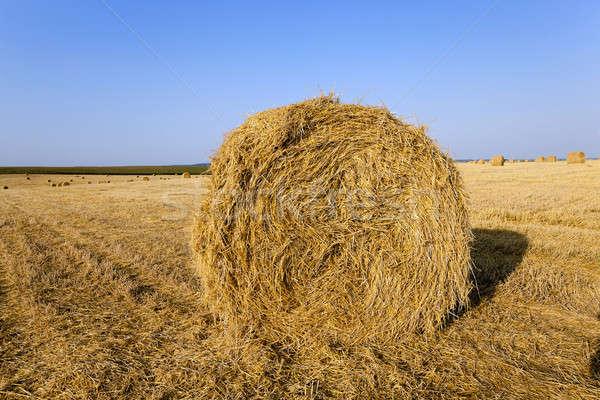 Słomy rolniczy dziedzinie kłamać pszenicy Zdjęcia stock © avq