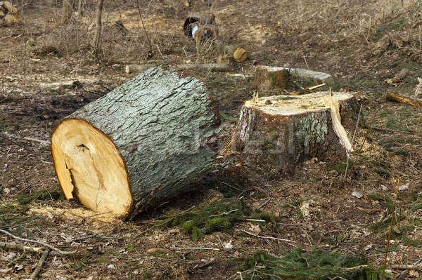 古い 木 小 ツリー 木材 ストックフォト © avq