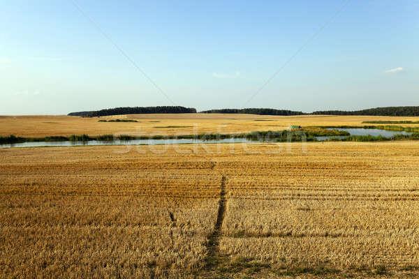 ścieżka rolniczy dziedzinie wąski pszenicy trawy Zdjęcia stock © avq