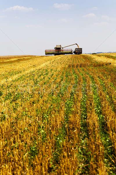 Hasat tarım alan dışarı buğday Stok fotoğraf © avq