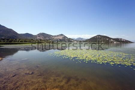湖 モンテネグロ 夏場 年 水 草 ストックフォト © avq