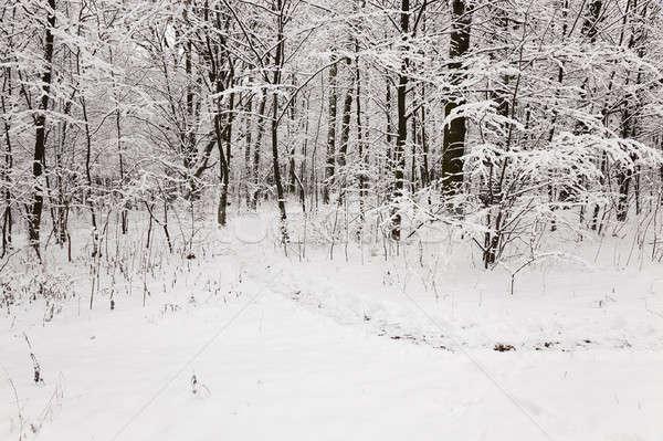 зима деревья зимний сезон лес природы свет Сток-фото © avq