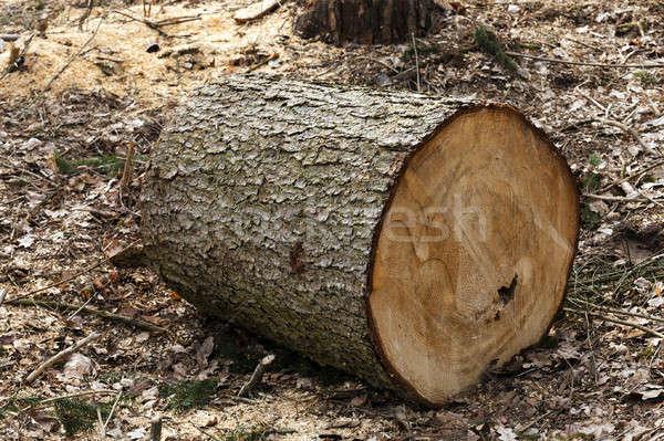Eski ağaçlar küçük ağaç ahşap Stok fotoğraf © avq