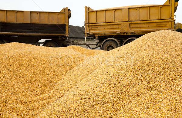 Mais hoop laatste oogst auto achtergrond Stockfoto © avq