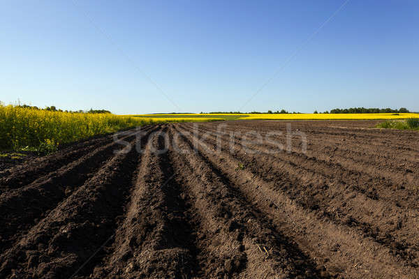 plowed field   Stock photo © avq