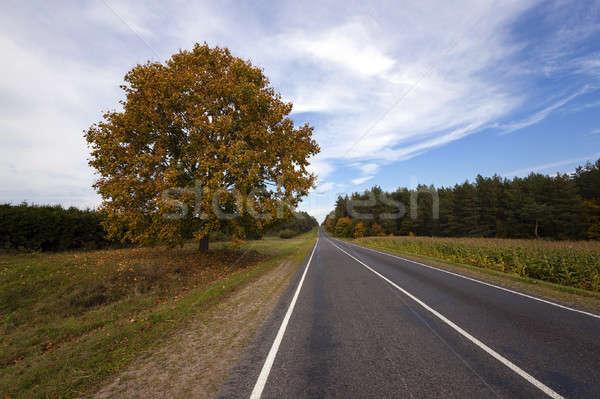 осень дороги небольшой дерево пейзаж Сток-фото © avq