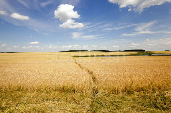 Dziedzinie mały rolniczy niebo krajobraz przemysłu Zdjęcia stock © avq