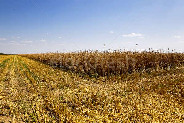 Aratás mezőgazdasági mező szállít ki búza Stock fotó © avq