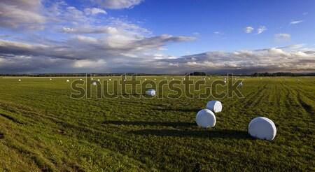 packed grass   Stock photo © avq