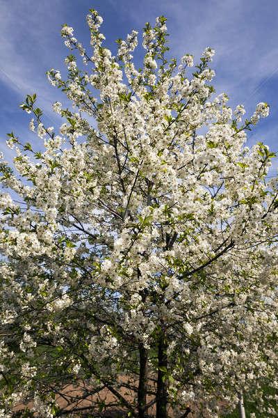 Kwiaty wiosną sezon kwiat Zdjęcia stock © avq
