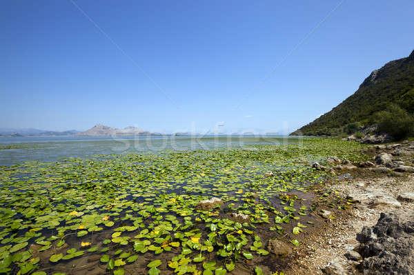 Meer Montenegro zomertijd jaar groene reizen Stockfoto © avq