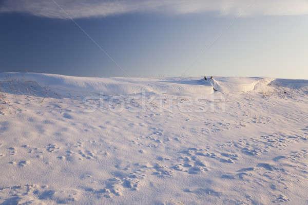 snow-covered field   Stock photo © avq