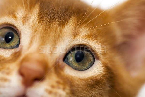 Сток-фото: котенка · мало · ребенка · природы · кошки