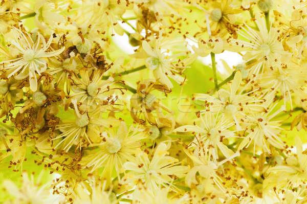 çiçekler küçük gıda doğa Stok fotoğraf © avq