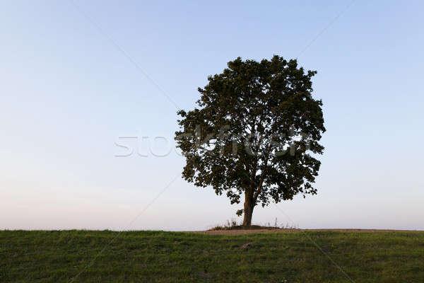 Ağaç tepe büyüyen zaman gökyüzü manzara Stok fotoğraf © avq
