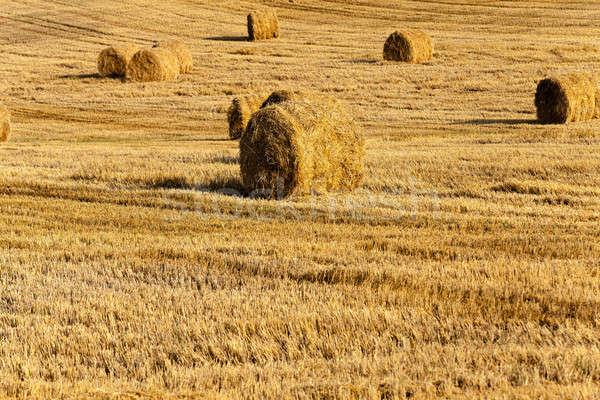 Foto stock: Paja · trigo · cosecha · campo · planta