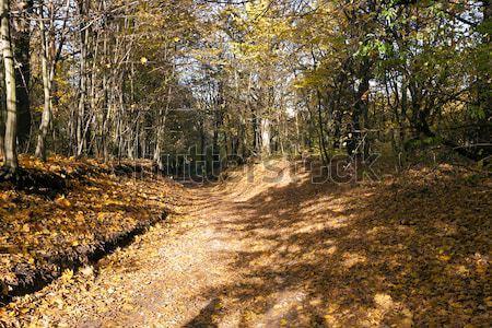 Fák ősz ősz idő park erdő Stock fotó © avq