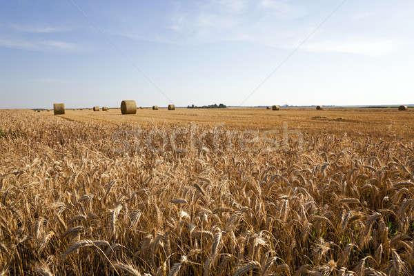 Rolniczy dziedzinie krajobraz lata kolor rolnictwa Zdjęcia stock © avq